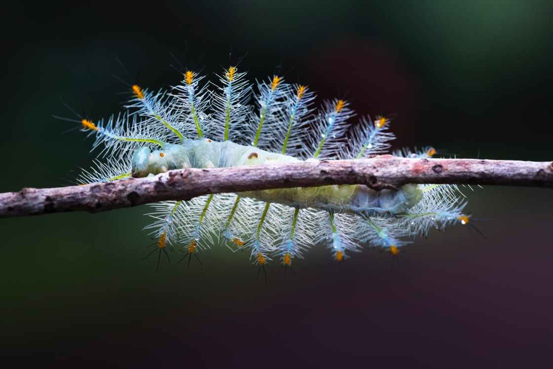 a wild and gorgeous caterpillar photo by Quang Nguyen Vinh